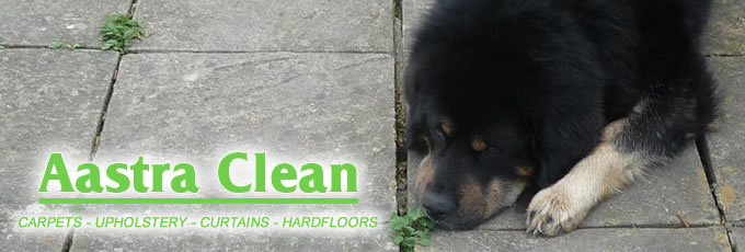 pet odour removal bristol